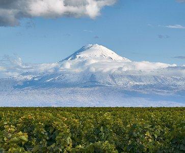 Dégustation de vins arméniens