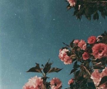 «Այնտեղ, որտեղ ծաղկում են վայրի վարդեր.անատոլիական պատմություն»